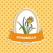 foto of citronella  - Health and Nature Collection - JPG