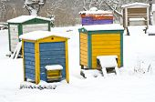 pic of beehive  - colorful wooden beehives in winter farm garden on snow  - JPG
