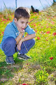 stock photo of windflowers  - 8 year old boy enjoying a field of wild red anemone coronaria  - JPG