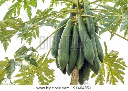 Papaya Group