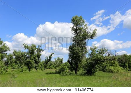 Summer scene with green land in steppe