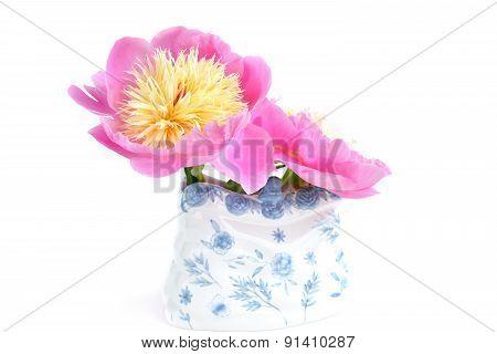 Paeonia Lactiflora 'bowl Of Beauty'