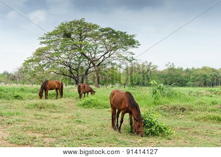 Horses On A Farm With Green Grass