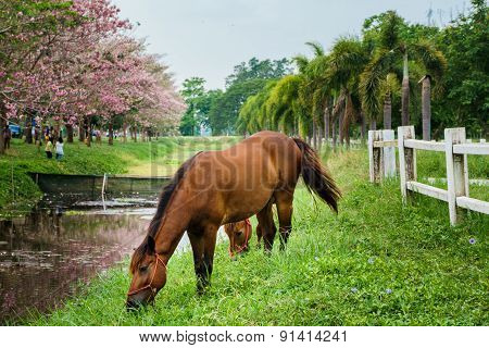 Equine Standing With Green Grass, Horse In Outdoor View