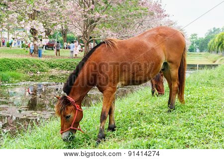 Horse Standing Near Canal With Green Grass, Outdoor