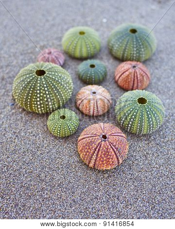 colorful sea urchins on the beach