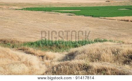 Agriculture Land With Cereal Harvested Fields And Green Grass