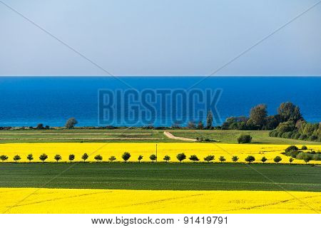 View To The Baltic Sea With Canola Field