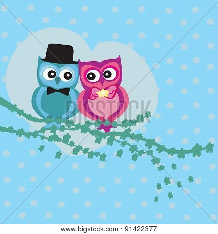 Cute Owl Couple In Love