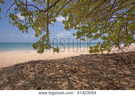 Tropical beach in Martinique