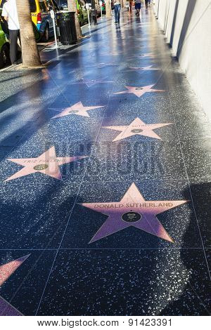 Many Stars  Like Donald Sutherland Or Friz Freleng On Hollywood Walk Of Fame