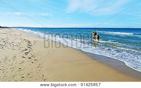 Man Riding A Horse In The Sea