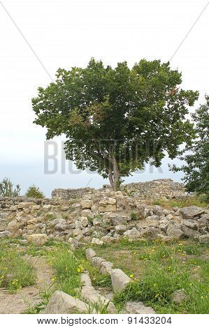Tree And Ruins Of Chersonese Taurian. Crimea