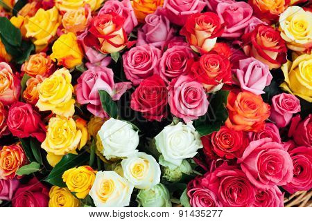 nice roses
