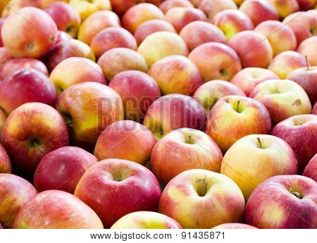 Lined Up Apples
