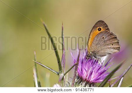 Butterfly on a purple flower.