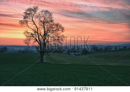 Lonely tree and beautiful sky at sunset