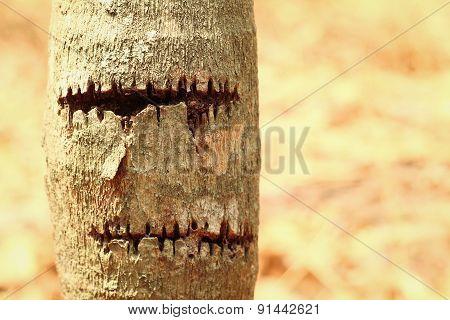 Bark Or Pile Of Pine Wood