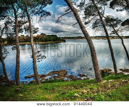 Pine Trees By The Water