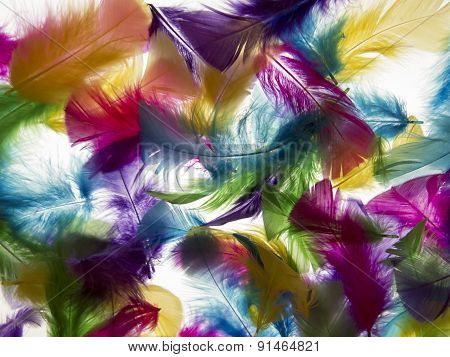 Light Background Feather