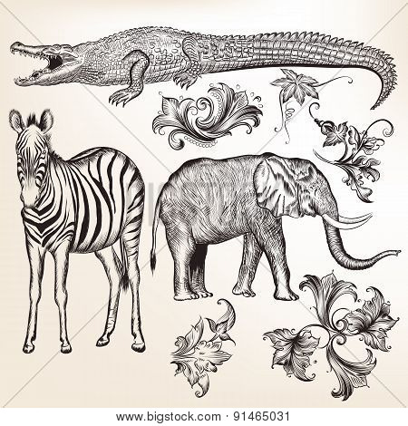 Collection Of Vector Swirls And Animals