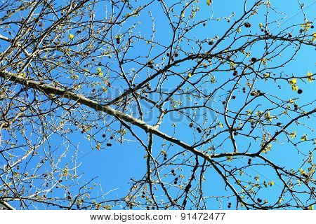 Flowering branches of tree over blue sky background