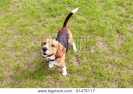 Funny cute dog in park