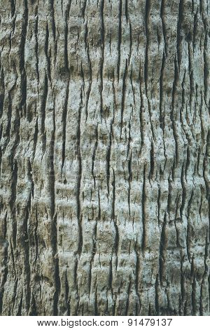 Brown Tree Bark Texture Fore Background