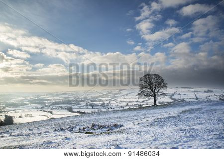 Beautiful Winter Landscape Snow Covered Fields In Countryside