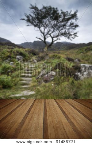 Solitary Tree On Mountain And Footpath Landscape In Summer With Wooden Planks Floor