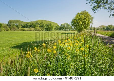 Rural Dutch Landscape In The Spring Season