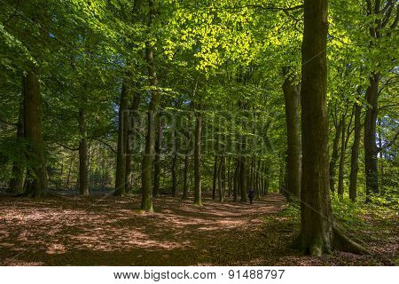Footpath through a forest in sunlight in spring
