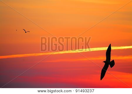 Seagulls Silhouettes In An Orange Sky