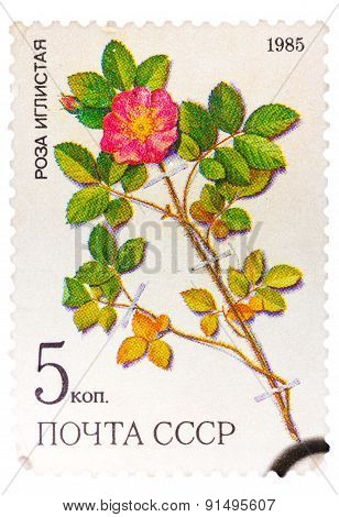 Stamp from the USSR Scott 2008 catalog no. 5381 shows a prickl