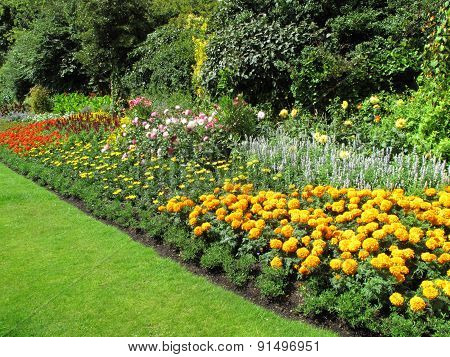 Flowerbed border of marigolds