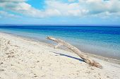 pic of driftwood  - white driftwood in a tropical beach on a cloudy day - JPG