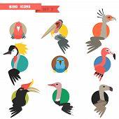 stock photo of tropical birds  - Exotic tropical bird set with flat design - JPG