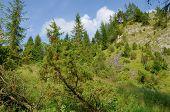 foto of pieniny  - Mountains  - JPG