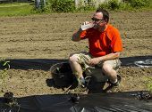 image of tomato plant  - A organic farmer taking a water break after planting some tomato plants - JPG