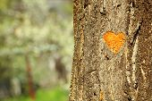 stock photo of carving  - Heart carved in tree close - JPG