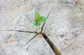 pic of decomposition  - Seedling growing in a timber Focus on seeding - JPG