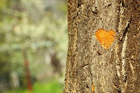 foto of carving  - Heart carved in tree close - JPG