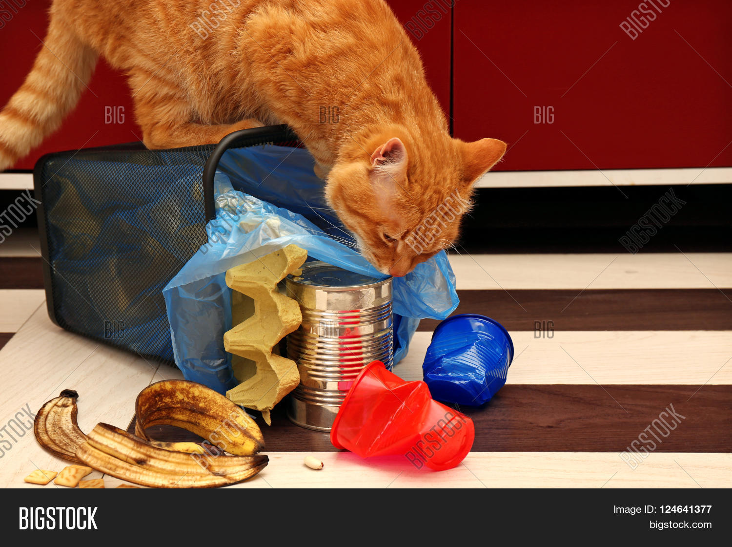 red cat at full inverted garbage basket on kitchen floor stock