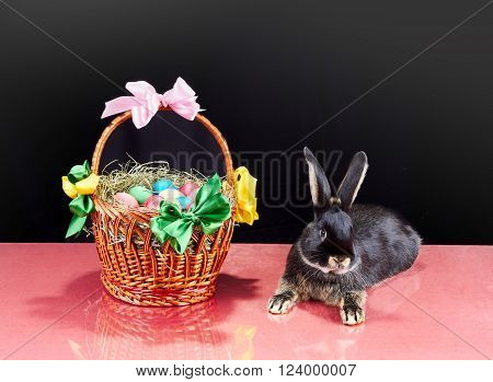 Rabbit is lying near a basket on a black background