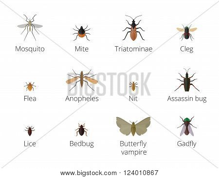 Insect parasites . Bug Insect parasites Set isolated on white background. Insect skin parasites biology bugs. Insect skin parasites flying bugs. Set funny insect skin parasites