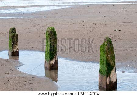 Three Wooden Posts