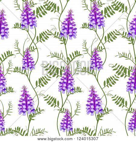 Seamless pattern wildflowers bindweed bird vetch canada pea. Vector illustration