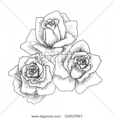 Highly detailed hand drawn roses isolated on white. Vector. Hand drawn artwork. Love concept for wedding invitations, cards, tickets, congratulations, branding, boutique logo, label