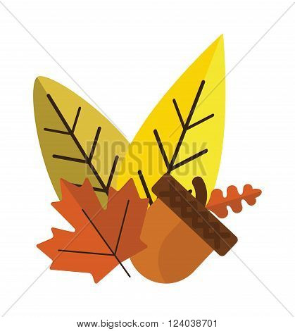 Dried acorns with leaves flat vector illustration. Acorns oak isolated on white. Nature plant acorns and leaves. Acorns with leaves autumn decoration.