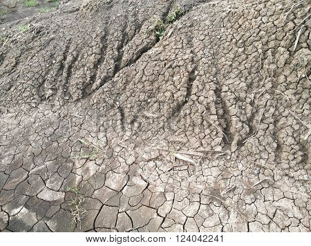close up dry cracked soil in country Thailand